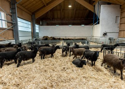 Unsere Jura-Schafe - Kremstaler Junglamm